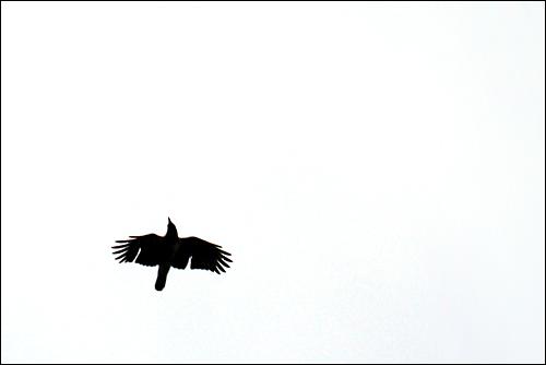 Siluett avfågel