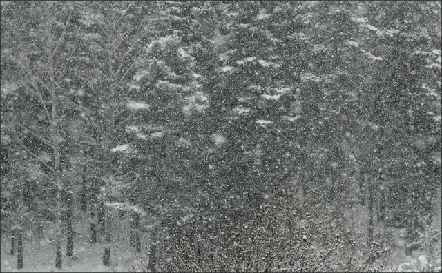 20130115_Snowstorm