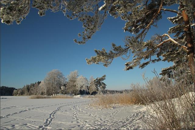20130119_VinterdagRimfrost