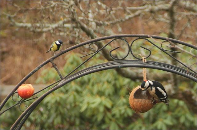 20131223_Birds