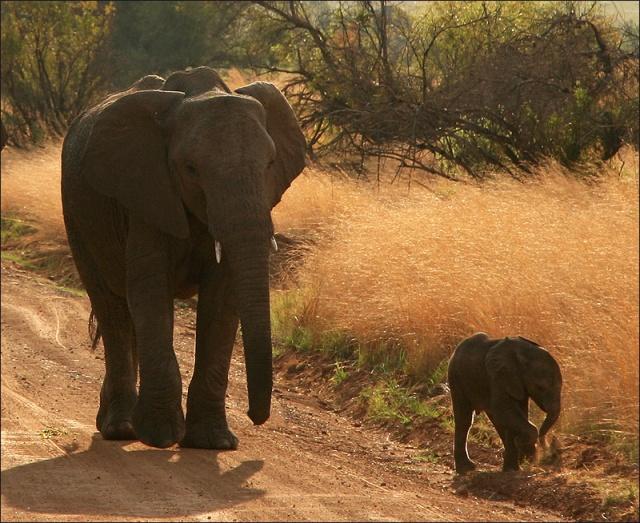 20140131_Elephants