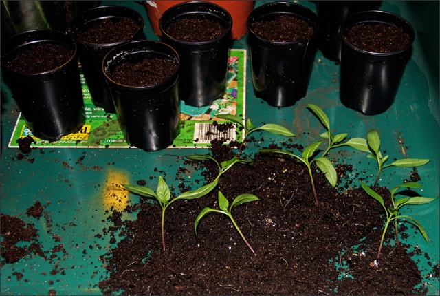 20140130_PlantorDelade