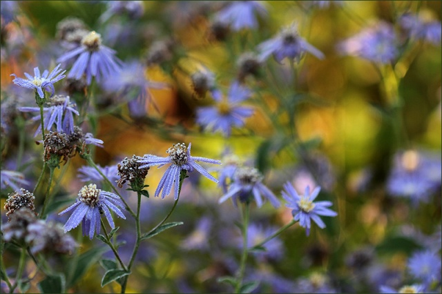 20141001_Aster
