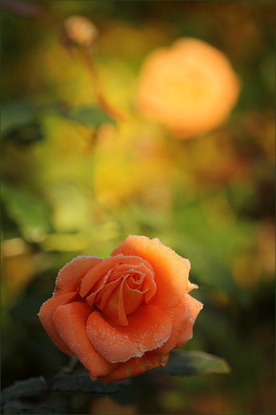20141001_FloraDanica