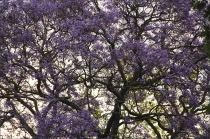 20141027_Sydafrika01