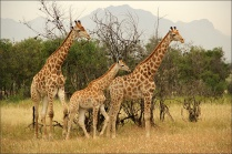 20141027_Sydafrika02