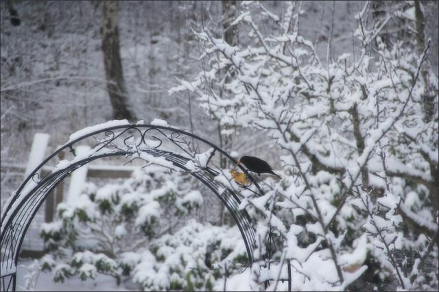 20140317_Snow