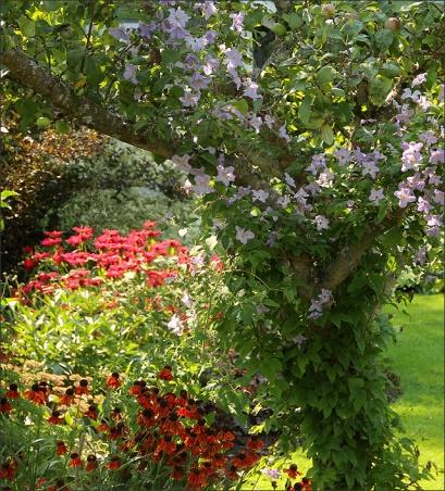 20140801_30_Garden01