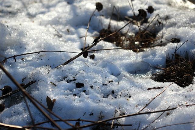 20150312_Snow