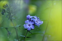 20151002_BF_GardenNow08