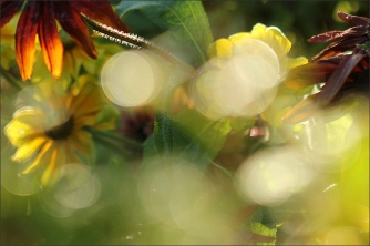 20151002_BF_GardenNow20
