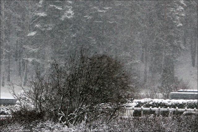20150112_Snow