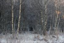 20151228_Vinterdag02