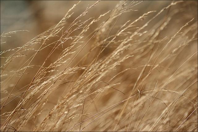 20160326_Grass